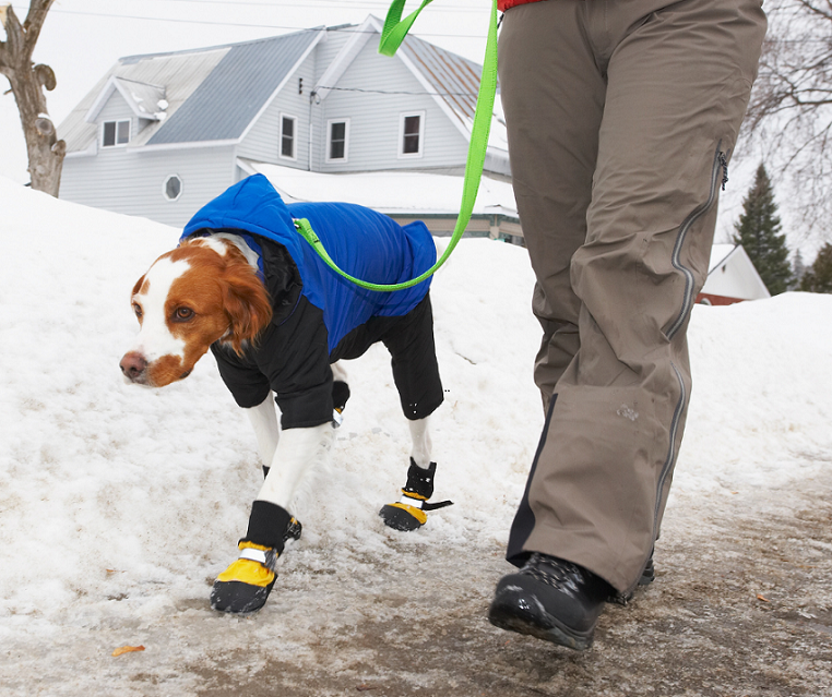 Winter Curbside Care Veterinary VHA Blog